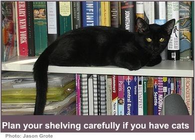 house pets cat on the shelf