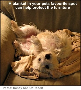 house pets blanket to protect sofa