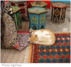 cat sleeping on moroccan rug at moroccan tables